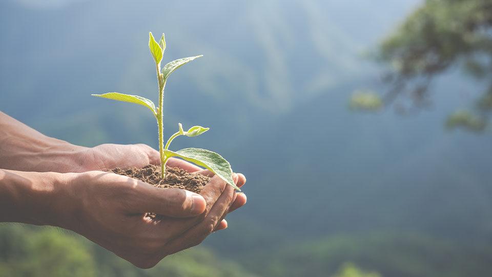 Na zdjęciu widzimy dłonie trzymają kiełkującą roślinę
