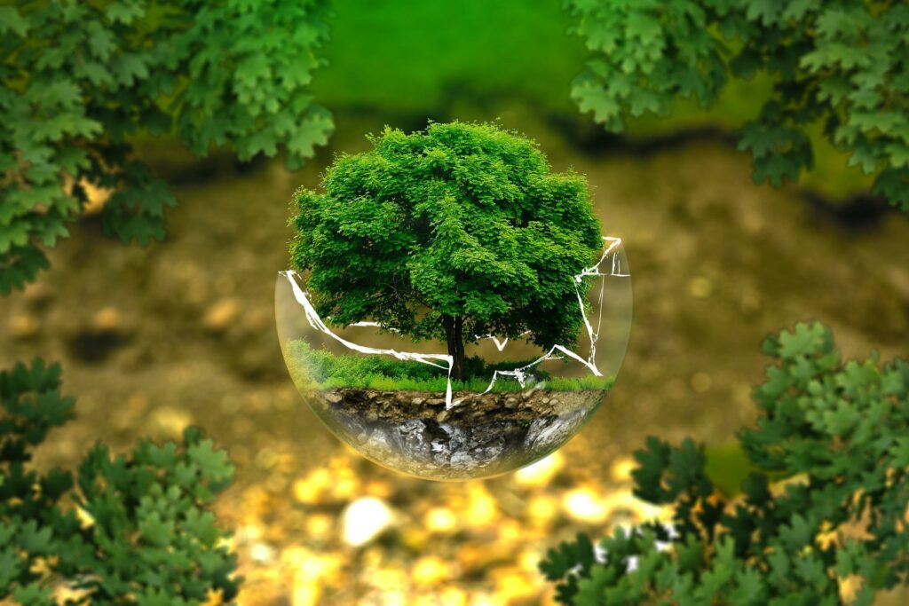 zielone drzewo w szklanej kuli