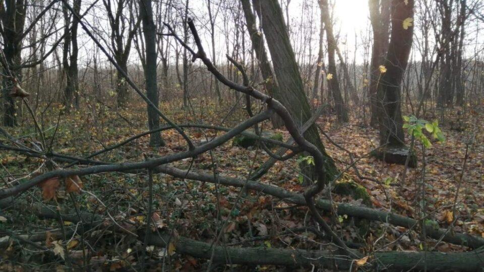 las z zagubionymi polskimi grobami